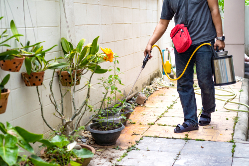 What Is Included In A Pest Control Service?