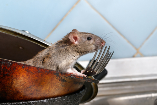 What Are the Most Common Household pests?