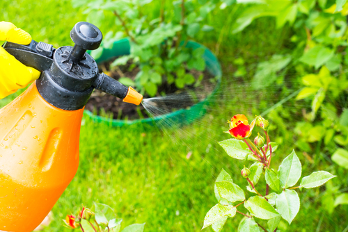 Why Pest Control Service For Your Home Garden Is Important?